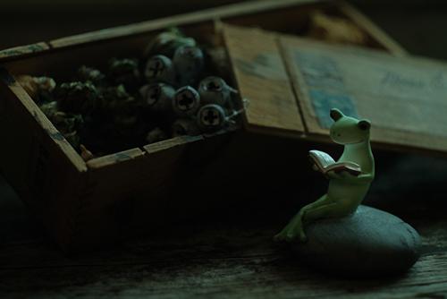 ツバキアキラが撮ったカエルのコポー。静かな部屋の片隅にて、古い小箱のそばで本を読んでいるコポタロウ。