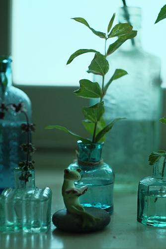 ツバキアキラが撮ったカエルのコポー。使い終わったインク瓶に葉っぱをさして、これまでの日記を読み返しているコポタロウ。