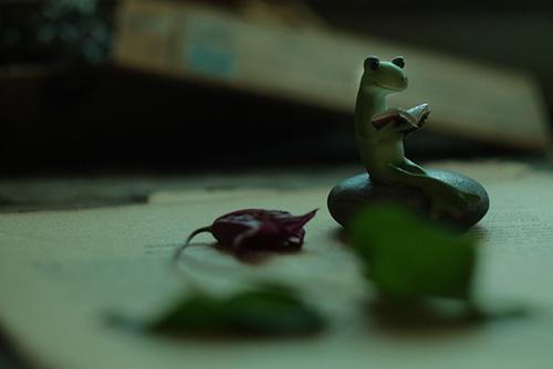 ツバキアキラが撮ったカエルのコポー。花が落ちる微かな音を聴きながら、本を読んでいるコポタロウ。