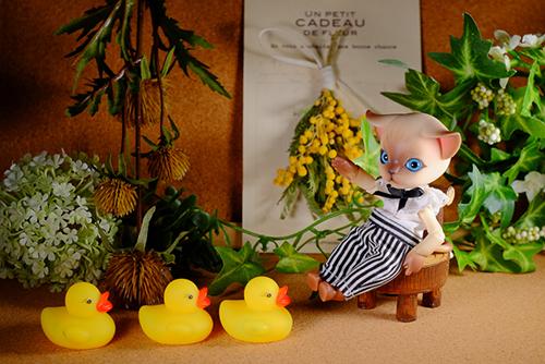 ツバキアキラが撮った、ISLAND DOLL・Luo LuoのRicky。小さなミモザのブーケが飾られたお部屋で、アヒルさん達と楽しそうに遊んでいます。