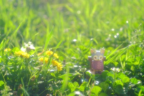 ツバキアキラが撮った、VAG・MORRIS、通称・つのねこ。咲いているタンポポに、ご挨拶をしているボルドーちゃん。