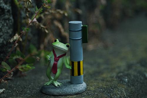 ツバキアキラが撮ったカエルのコポー。飲みすぎて、帰り道がわからなくなってしまったコポタロウ。