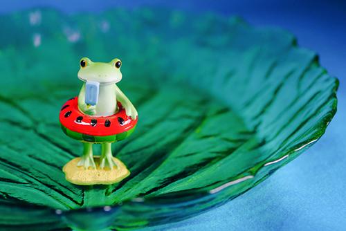 ツバキアキラが撮ったカエルのコポー。ガラスでできた葉っぱのお皿に水を張って、ひんやり気分を堪能しているコポタロウ。