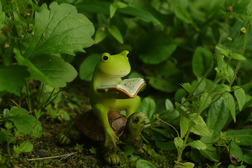 ツバキアキラが撮ったカエルのフィギュア。茂みの中で亀に乗っかって、本を読んでいるカエル。