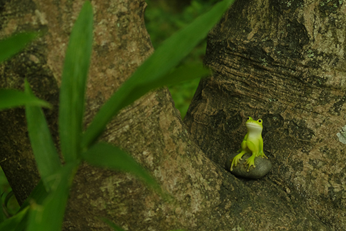 ツバキアキラが撮ったカエルのフィギュア。木の根っこに座って、かくれんぼしているカエルさん。