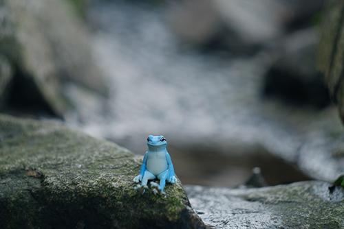 ツバキアキラが撮った、奇譚クラブ・座る蛙。小さな池でスイスイ泳いで、ちょっと、ひとやすみしている座る蛙。