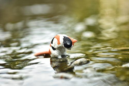 ツバキアキラが撮った、エール・おじぎさん。水の中を覗き込んで、金魚を探している三毛猫。