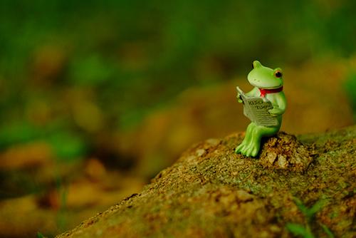 ツバキアキラが撮ったカエルのフィギュア、コポー。丘の上で、のんびり新聞を読んでいるコポタロウ。どうやらひなたぼっこではないようです。