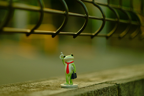 ツバキアキラが撮ったカエルのフィギュア、コポー。電車の網棚に寝転んでみたいコポタロウ。