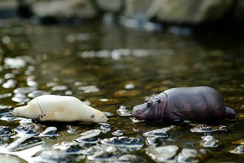 ツバキアキラが撮った、ガチャガチャ。パンダの穴、ZooZooZoo、第2弾、つかれた寝。フィギュアは容赦なく水にぶちこむワタシです。
