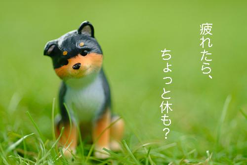 ツバキアキラが撮った、ガチャガチャ。エポック社・小首をかしげるどうぶつたち・2。頑張りすぎのあなたに、優しい言葉をかけてくれる、柴犬。