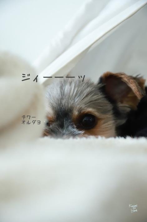 ブログ201008-1