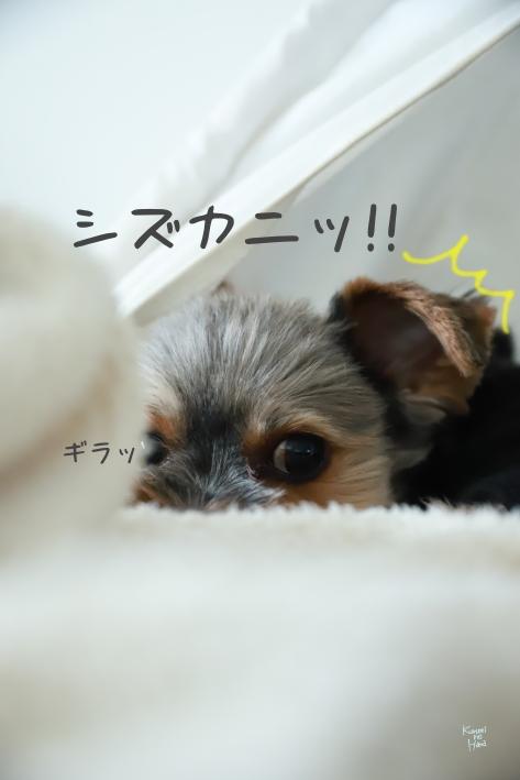 ブログ201008-2