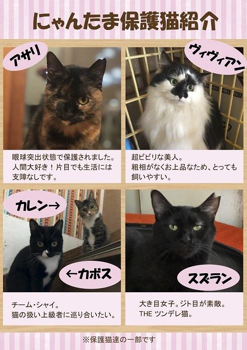 保護猫紹介