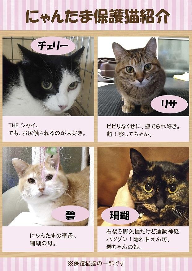 保護猫紹介2