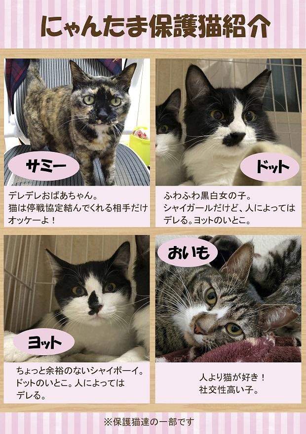 保護猫紹介3