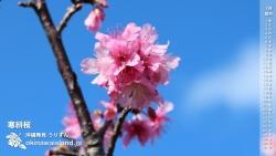 寒緋桜 沖縄の風景デスクトップカレンダー1月