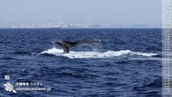 鯨 デスクトップカレンダー3月