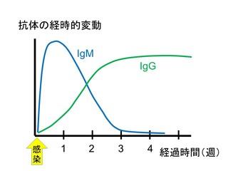 IgG.jpg