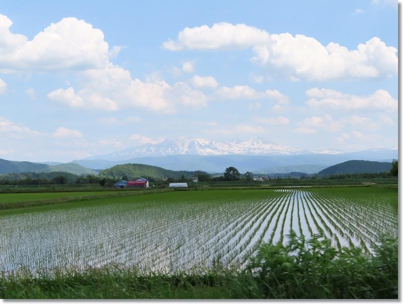 水田と大雪山連峰