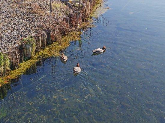諏訪湖一周4