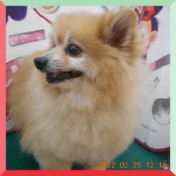 batch_DSCN0452.jpg