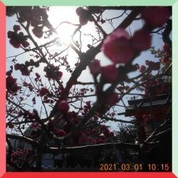 batch_DSCN4144.jpg