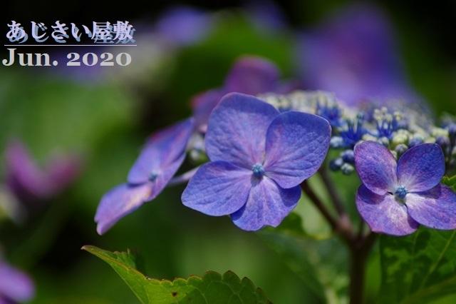 200615yasiki002.jpg