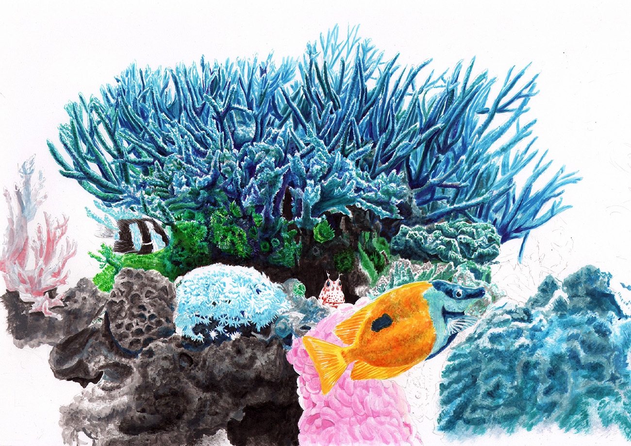 coral1001s.jpg