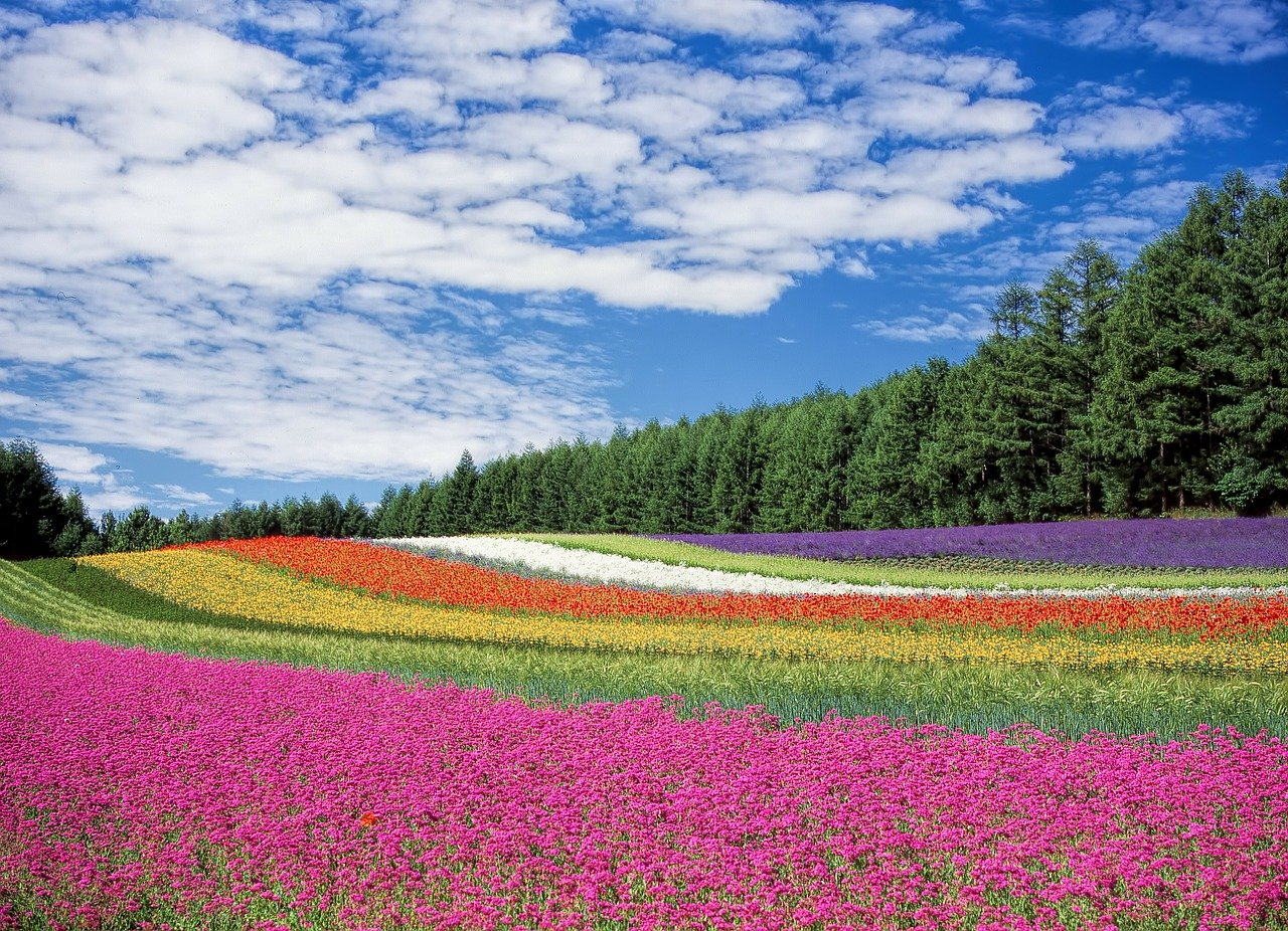 flower-field-250016_1280.jpg