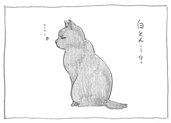 6-0519白とん