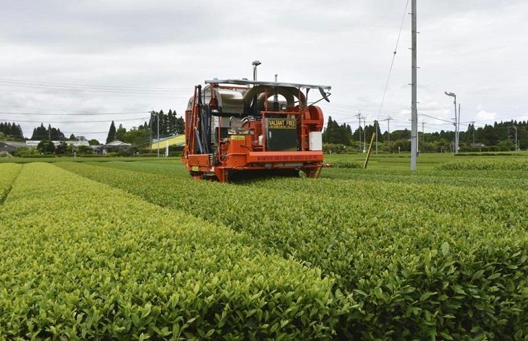 rgn1908260007-p1AI無人機で茶摘み実証実験