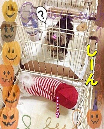 a-tsukihime5.jpg
