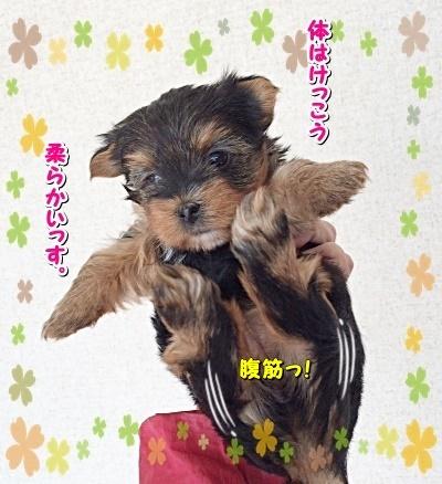 ichibaby2.jpg