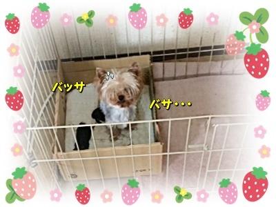 ichigo_20201104170514b05.jpg