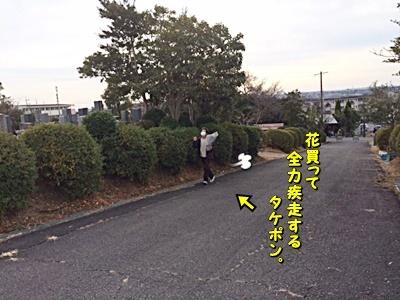 ohaka_2020123015372334e.jpg