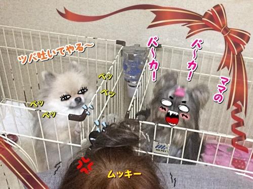 ptshimai3.jpg