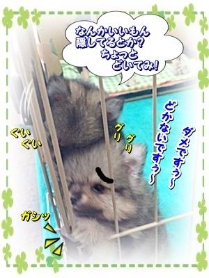 shibakobaby7.jpg