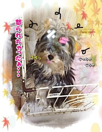 tsuki1_20201113181649a7f.jpg