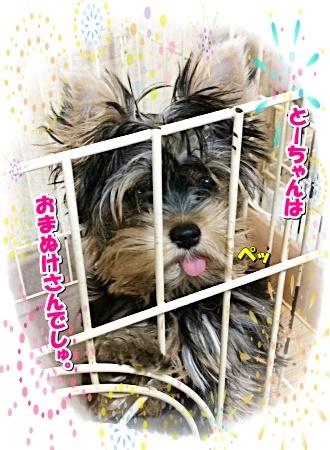 tsuki2_20200819182431e33.jpg