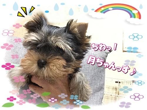 tsuki5.jpg