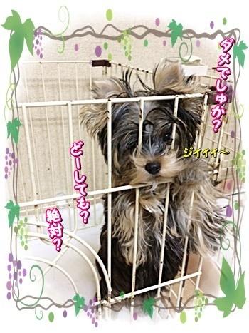 tsuki5_202009052256060bb.jpg