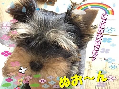 tsuki6.jpg