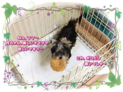 tsuki6_202009052256079c9.jpg