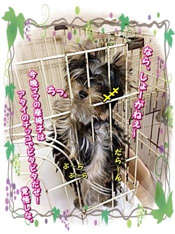 tsuki7_20200905225608b30.jpg