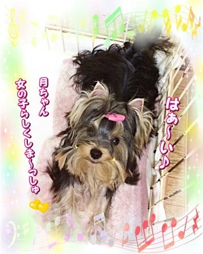 tsuki7_20201120140635c51.jpg