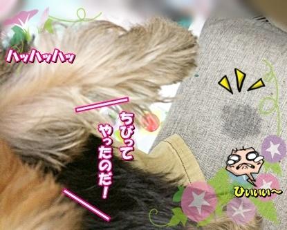 tsuki8.jpg