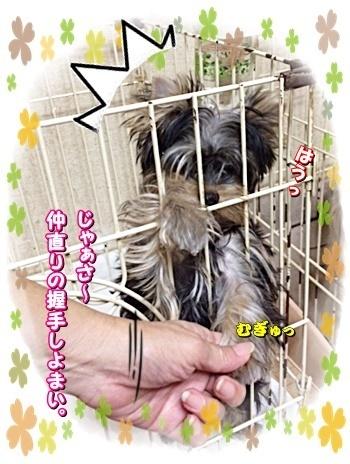 tsuki8_20200906172943c75.jpg