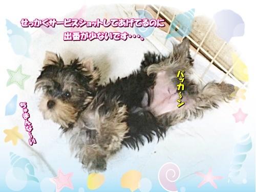 tsuki_20200806172531893.jpg