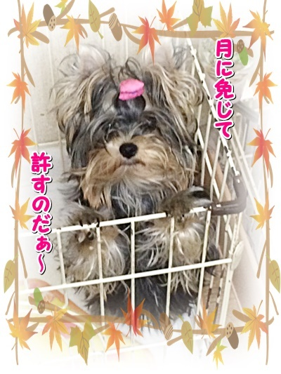 tsuki_20201112223134e1a.jpg